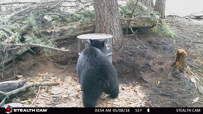 bear-bait-trail-cam_opt